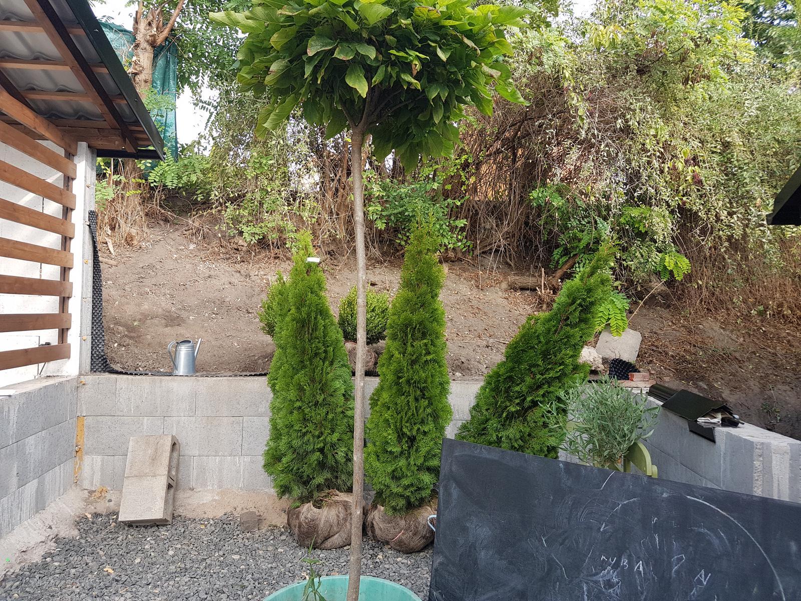 Drevník a kafé kútik - projekt roku  2018 - Urýchlujem rast stromov a kupujem tuje 1,75m vysoke. Buxusy som tiež priplatila takže už ich môžem aj tvarovať.