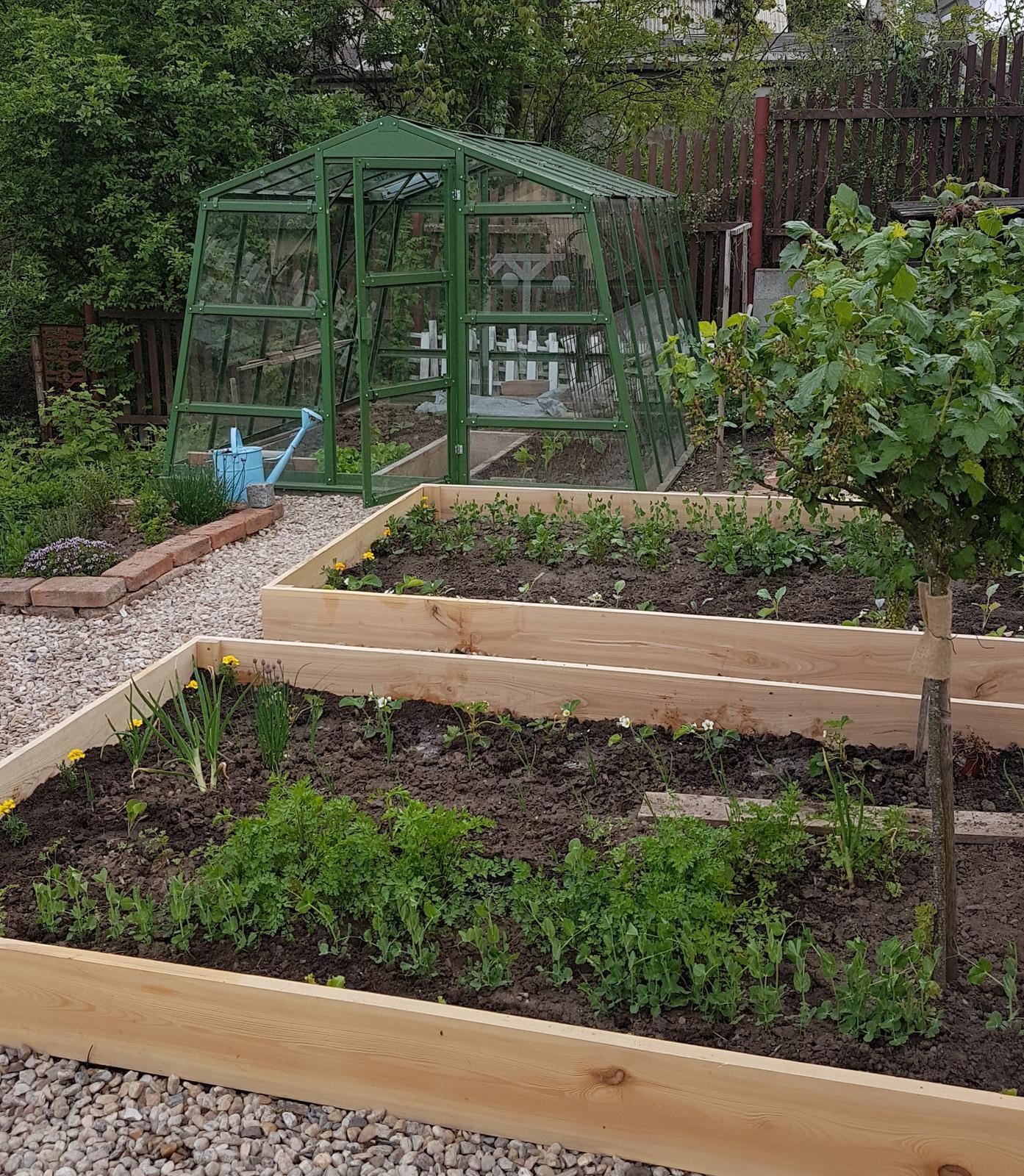 Záhrada - Prve dva záhony už máme v dreve, zajtra prehodíme ďalšie dva.