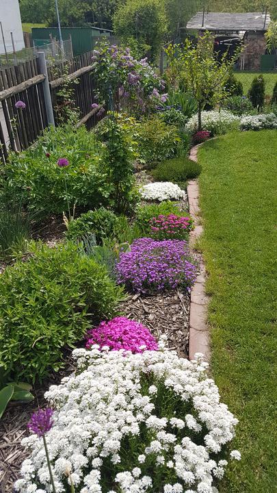 Predná časť záhrady opäť valí - kvitne o sto šesť 😍