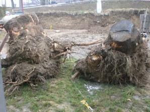 a tady pozůstatke po stromech, co s něma?? neá někdo zájem :-D