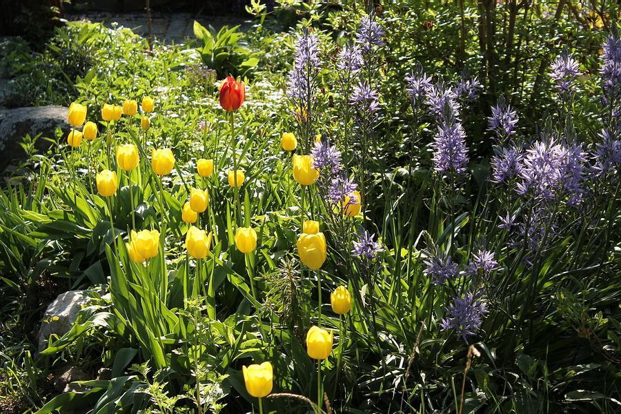 Vidiecke záhrady - inšpirácie - Obrázok č. 16