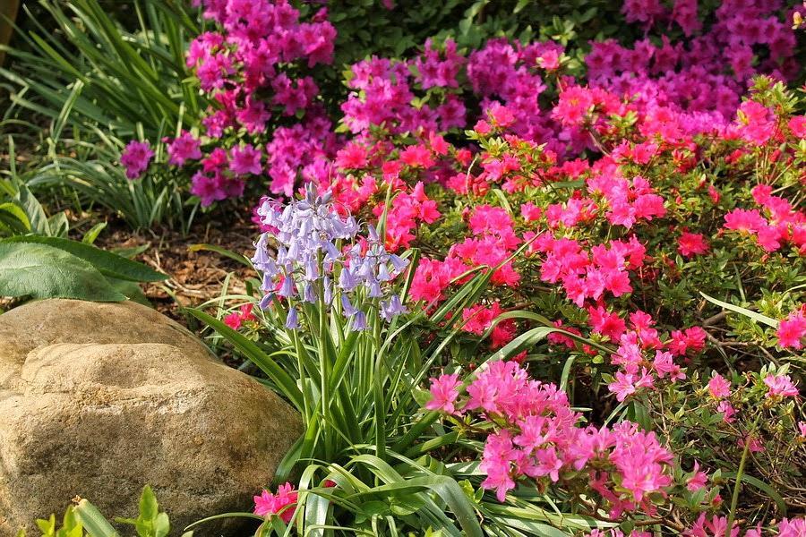 Vidiecke záhrady - inšpirácie - Obrázok č. 37
