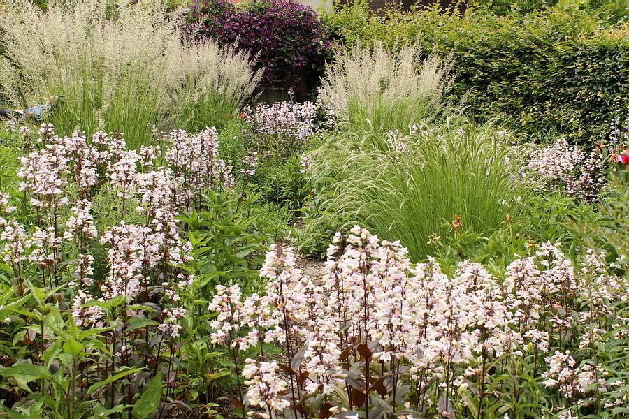 Vidiecke záhrady - inšpirácie - Obrázok č. 42