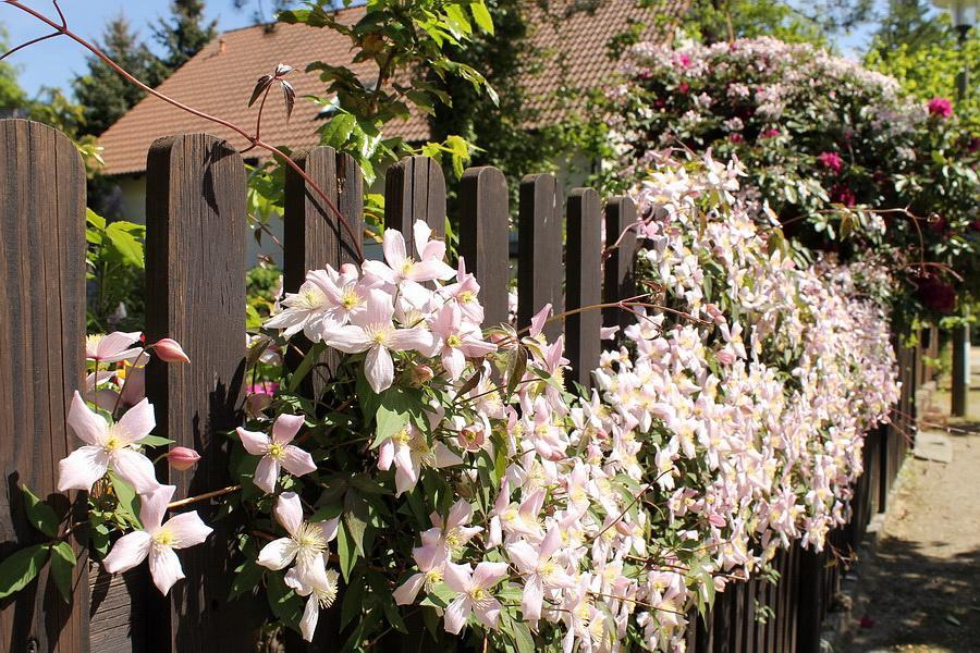 Vidiecke záhrady - inšpirácie - Obrázok č. 45