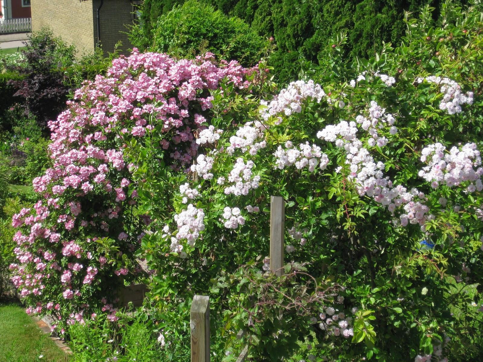 Vidiecke záhrady - inšpirácie - Obrázok č. 47