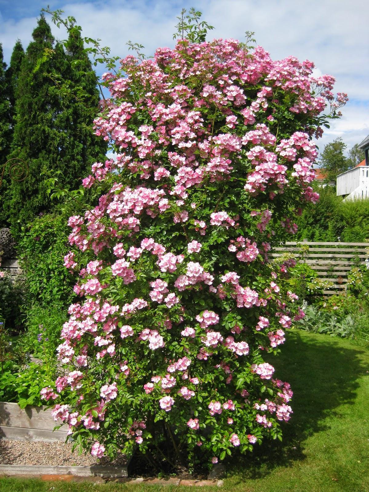 Vidiecke záhrady - inšpirácie - Obrázok č. 49