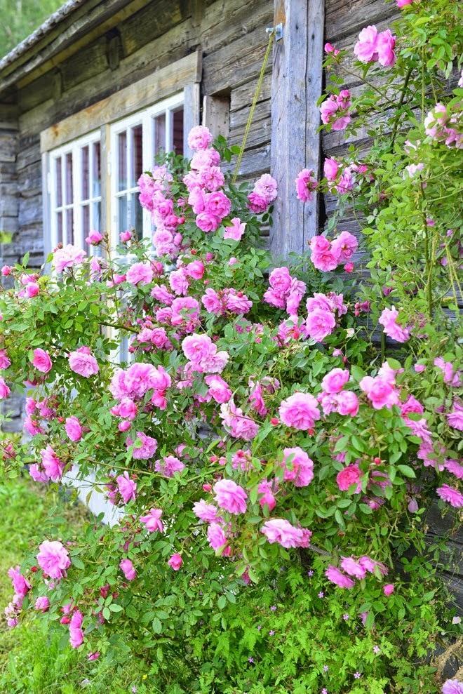 Vidiecke záhrady - inšpirácie - Obrázok č. 56