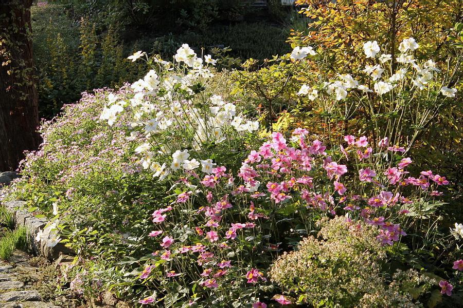 Vidiecke záhrady - inšpirácie - Obrázok č. 84