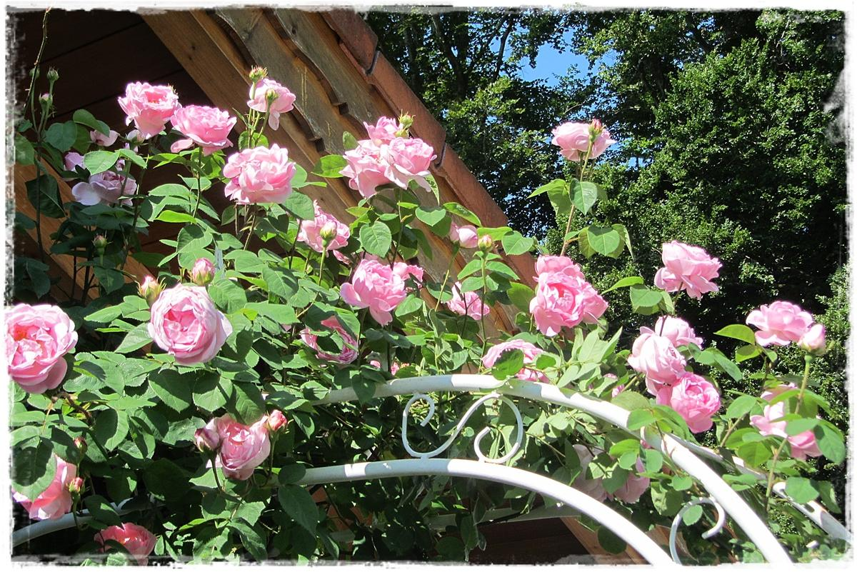 Vidiecke záhrady - inšpirácie - Obrázok č. 112