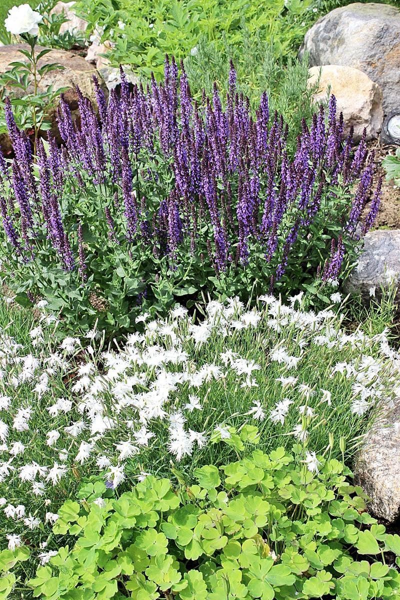 Vidiecke záhrady - inšpirácie - Obrázok č. 118