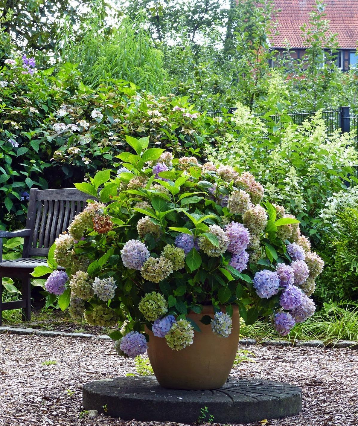 Vidiecke záhrady - inšpirácie - Obrázok č. 140