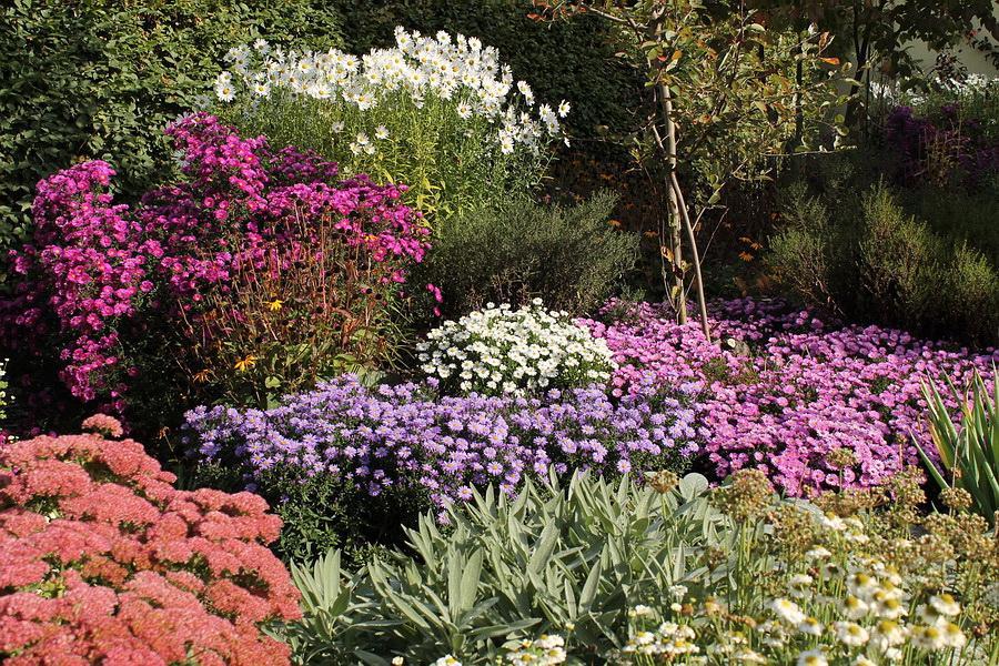 Vidiecke záhrady - inšpirácie - Obrázok č. 141