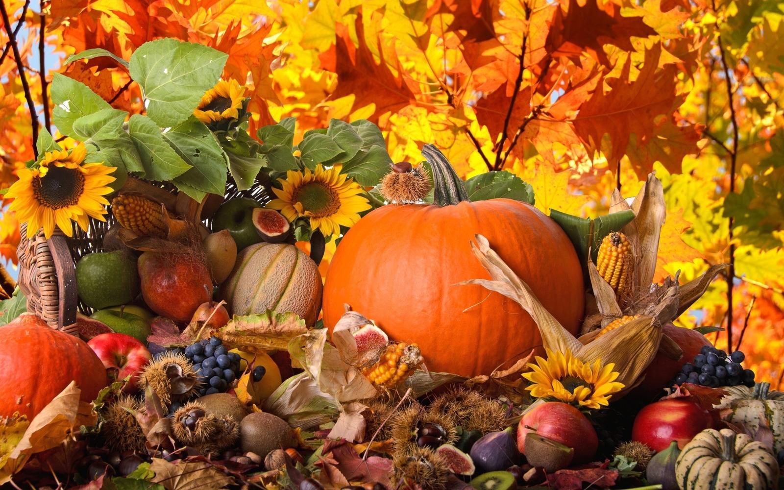 Užime si farebnú jeseň - Obrázok č. 8