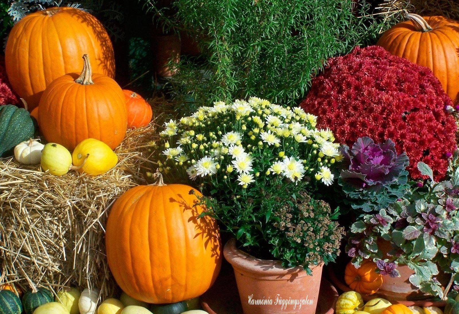 Užime si farebnú jeseň - Obrázok č. 28