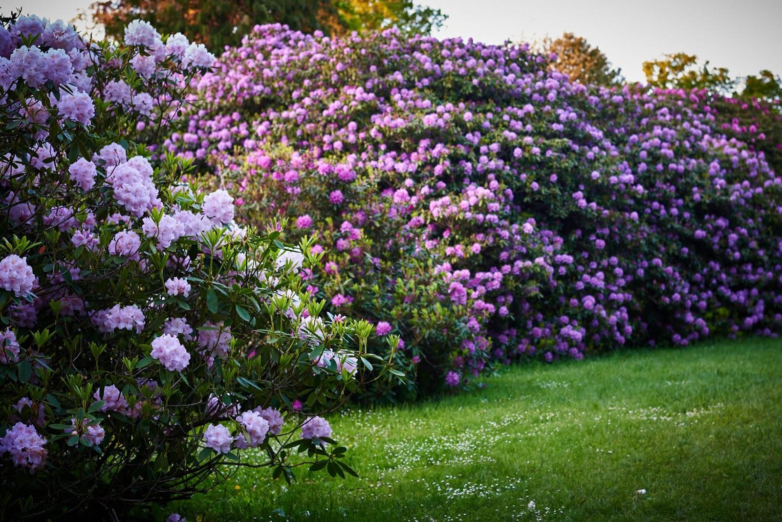 Vidiecke záhrady - inšpirácie - Obrázok č. 192