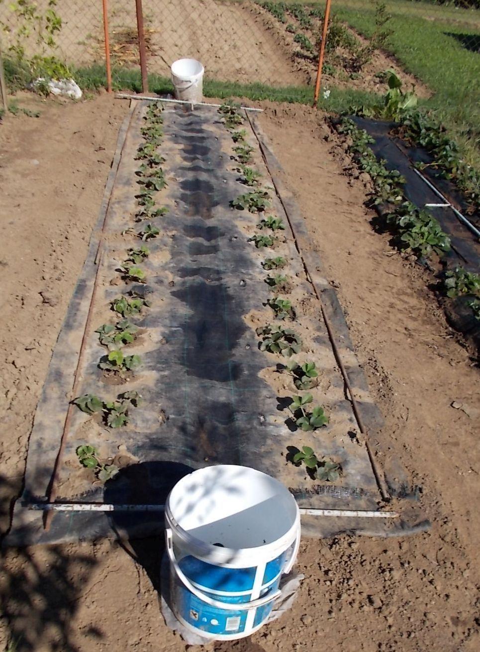 Používám pro pěstování černou... - Obrázok č. 2