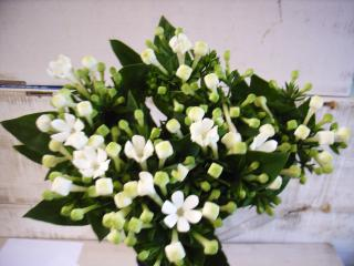 ahojte..z hyacintu sa da... - Obrázok č. 1
