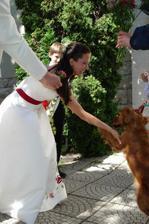 môj miláčik síce nebol pozvaný na svadbu, ale zagratulovať prišiel-psík Gina