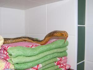 ...aj hada si chováme...:)