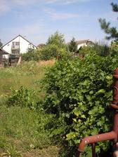 Záhrada,15 rokov neobrábaná