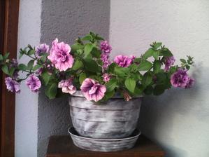 vynovený kvetináč