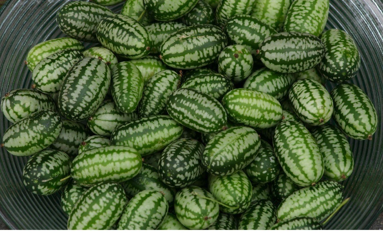 Cucamelon - semená - Obrázok č. 1