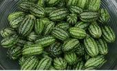 Cucamelon - semená,