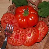 Paradajky Marmande Superprecoce - semená,