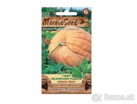 Tekvica ATLANTIC GIANT - semená - Obrázok č. 1