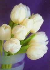 a tulipany