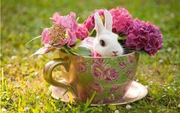 Živého zajačika by som na svadbu vážne nebrala :-) Ale nápad je to pekný