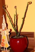 Pozostatok tohtoročnej vianočnej ruže v štýle Adams Family :-)