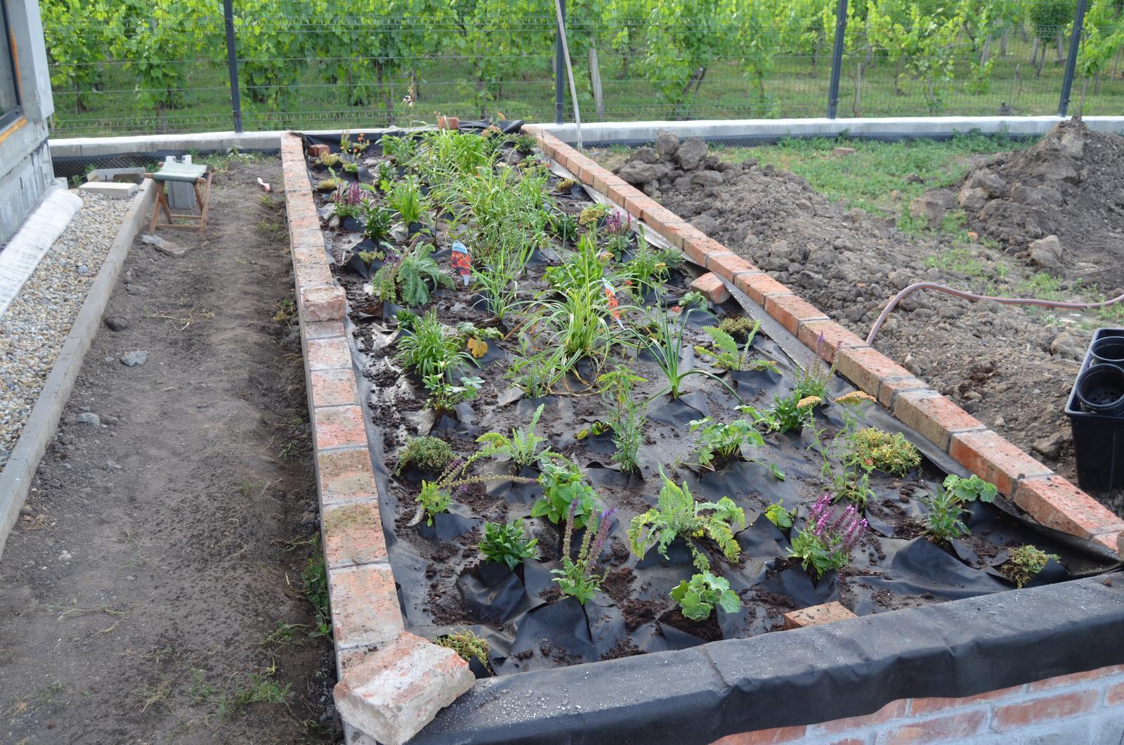 Okolie domu - hotovo cca 90 rastlín