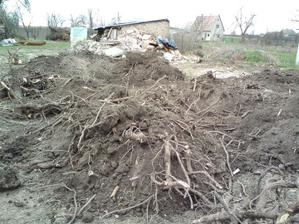 27.03.2010 vytrhávanie korenov na pozemku.... bolo ich neúrekom