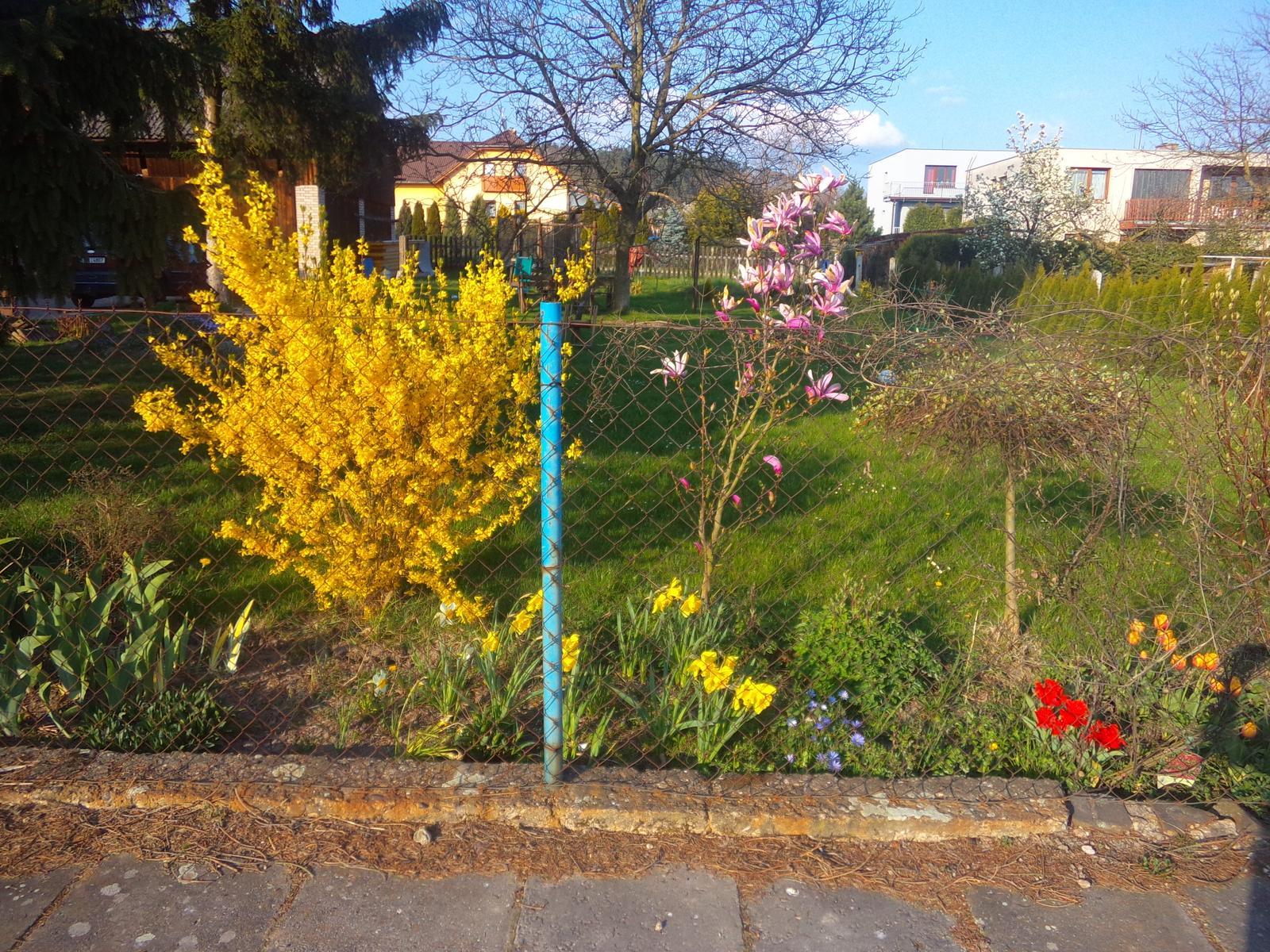 Náš domeček :-) - Nase jarni kvetena :-)