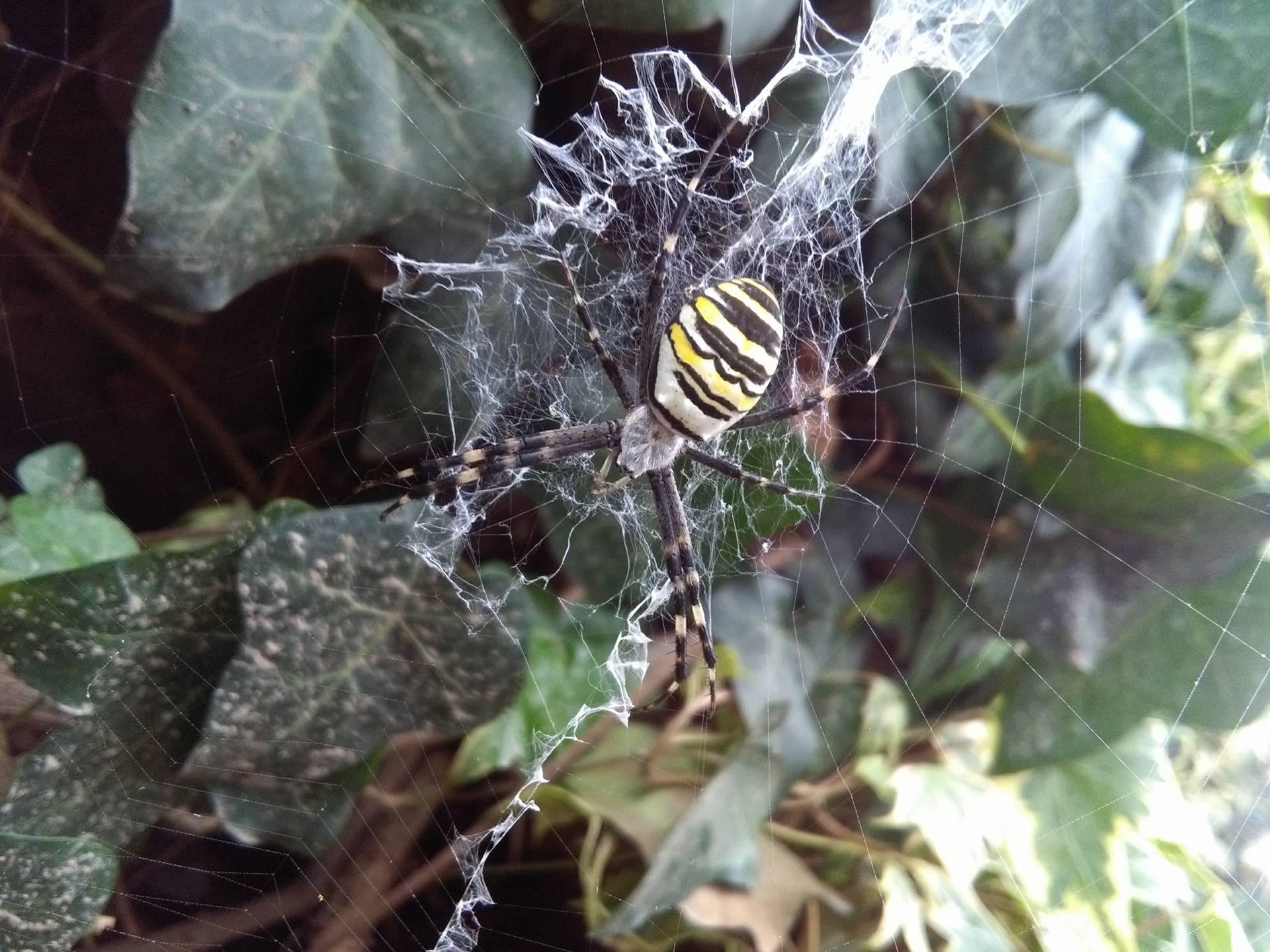 Na zahrade som narazila... - Obrázok č. 1