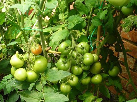 Zahrada - a letos opečovávaná :-)