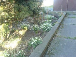 dva dny sluníčka a sněženky mají jaro