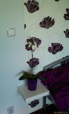 první orchidejka