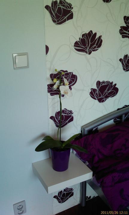 Bydlíme :) - první orchidejka