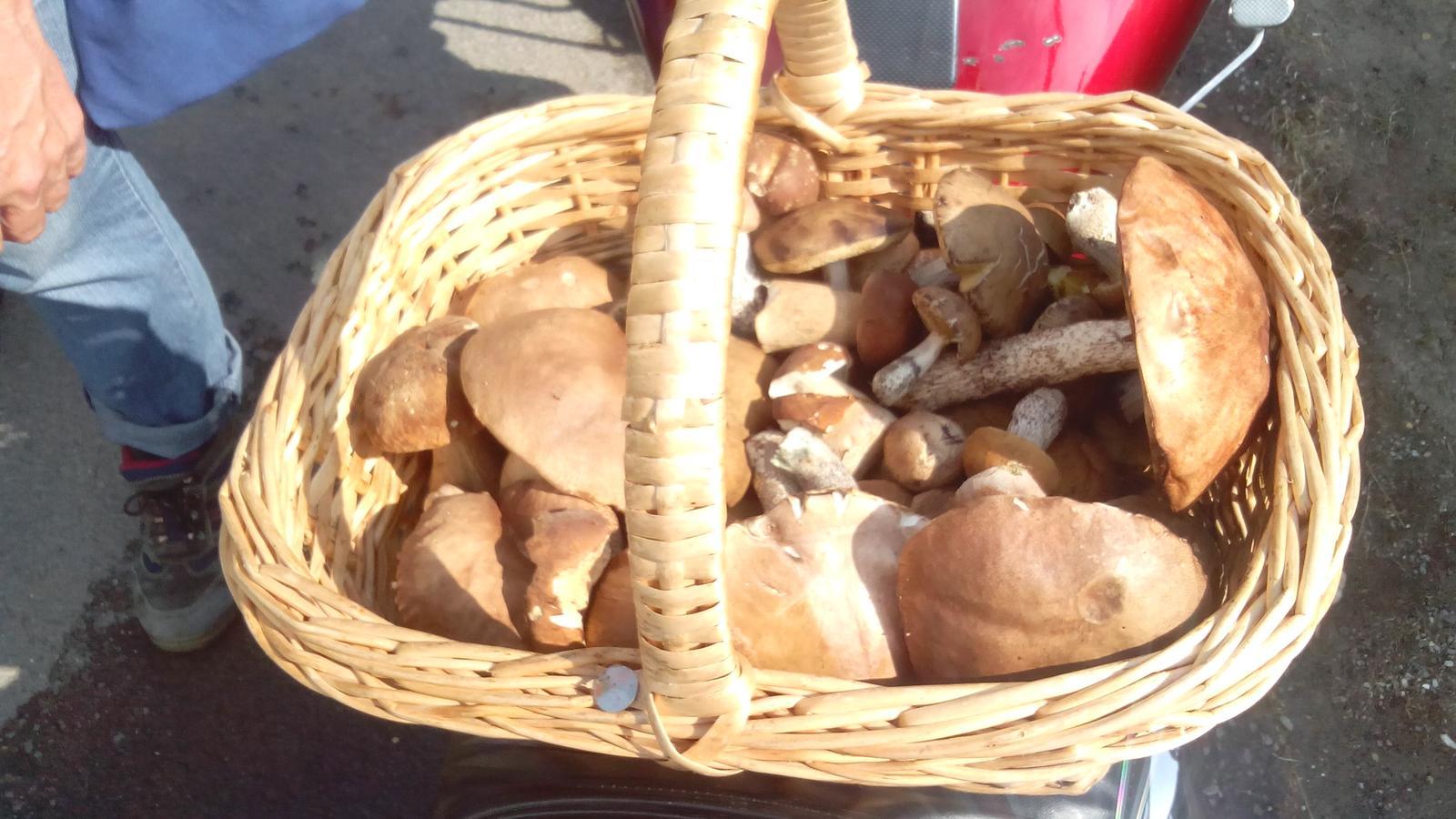 Pestovanie hlivy ustricovej - A takéto hríby sa zbierajú v hore nad Tekovskou Breznicou...