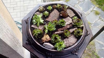 Misku som naplnil drobným kamením, trochou rašeliny a medzi poukladané kamene zasadil skalné ruže