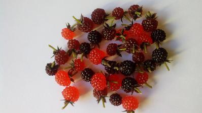 Umelé ovocie... Vyzerá naozaj ako čerstvé, dokonca je aj mäkké a som zvedavý, kto ho prvý ochutná... :o)