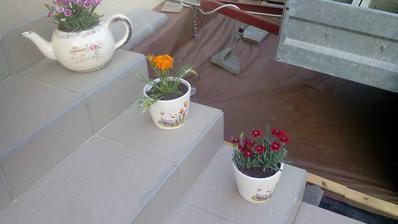 Dnes som dokúpil na trhu nejaké kvetinky (klinčeky a mini gerberu) a vyzdobil som trochu vstupné svhody do chalupy