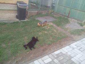 Môj Ferdinand bol tak zaujatý kladením dlažby, že ho ani susedov pes nevyviedol z miery.