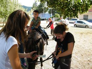 Veru dnes už ani kôň zadarmo nerobí...