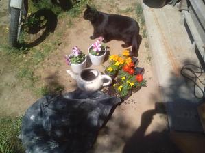 Dnes som kúpil na trhu zopár kvetov, ktoré som zasadil do kvetináčov z minulého roka. Škoda len, že ako som ich umýval, tak z nich zišli tie pekné maľované vzory. A samozrejme, všadeprítomný Ferdinand. :o)