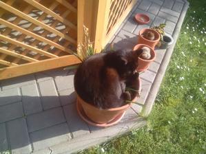A kde na záhrade sa najlepšie odpočíva? No predsa v kvetináči s narcisami. Čo na tom, že som ich pováľal? Aj tak by za chvílu odkvitli... :oˇ)