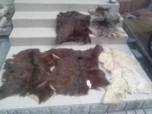 Aj takéto kožušiny, voľakedy kupované v ÚĽUV-e sa našli. Bol som presvedčený, že to je pes a tak som sa stavil so susedou, ktorá tvrdila, že to je ovca. Odniesol som ich ku kožušníkovi a povedal, že je to kamerúnska koza.