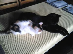 Ani nie po týždni sa Saša naučila od Ferdinanda, kde sa dobre oddychuje...
